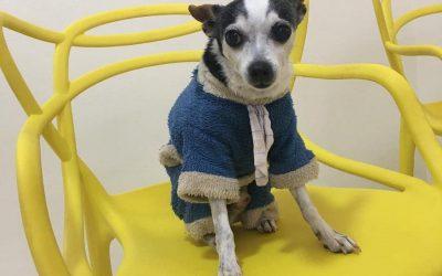 Conheça Historinha do Kininho na PetStories!
