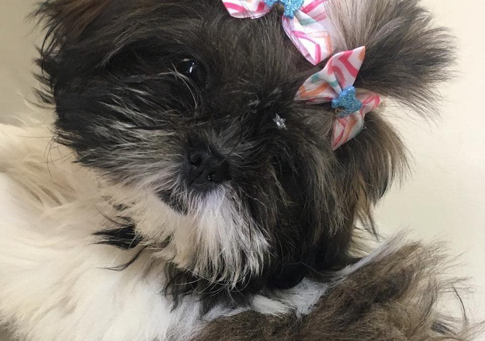 Conheça mais uma Historinha da PetStories!
